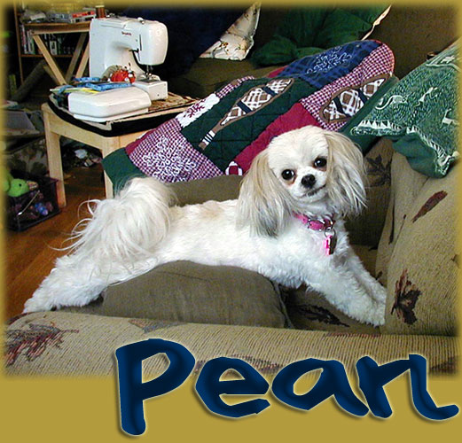 Pearl! September Small Dog of the Month