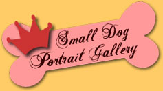 The Alameda Small Dog Portrait Gallery